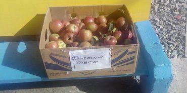 Коломиян запрошують пригоститися яблучками. ФОТОФАКТ