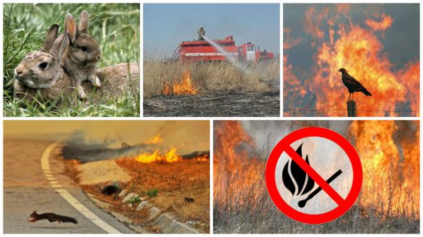 Рятувальна служба закликає прикарпатців не спалювати сухої трави, листя та інших рослинних залишків