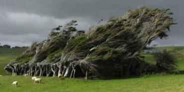 Прикарпатців попередили, що сильний вітер може стати причиною вимкнень світла