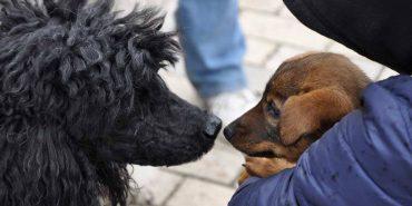 На Франківщині пройшов марш за права тварин. ВІДЕО