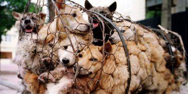 Поліція Прикарпаття каратиме за знущання з тварин