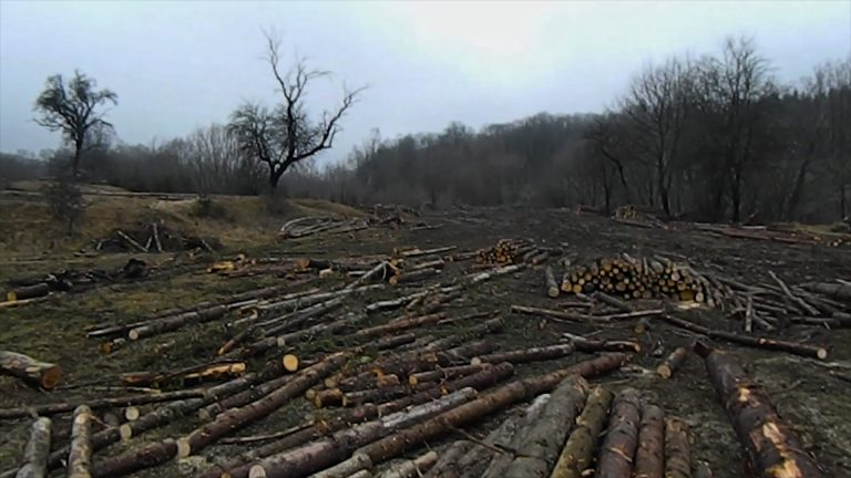 В Україні збільшилась кримінальна та адміністративна відповідальність за вирубку лісу