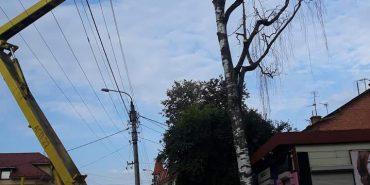 Коломийські комунальники зрізають сухі дерева. ФОТОФАКТ