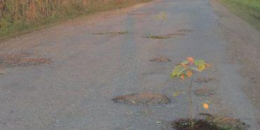На Франківщині в ямах на дорозі посадили дерева. ФОТОФАКТ
