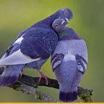 голуби-песочница-259346