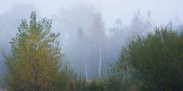 Осінні тумани в об'єктиві фотографа з Коломиї. ФОТО