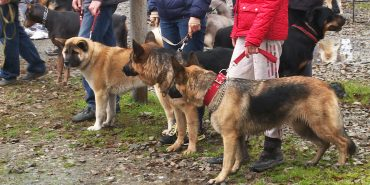 Вперше за 25 років: у Коломиї провели виставку собак. ВІДЕО