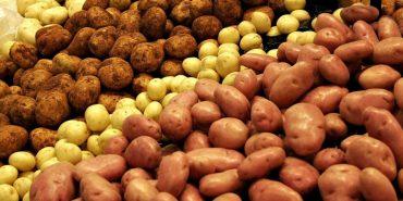До кінця року в Україні подорожчає картопля, – експерт