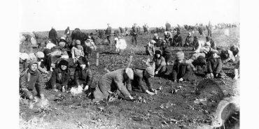 Голодомор-1933: за три вкрадені картоплини відправляли у заслання на 10 років