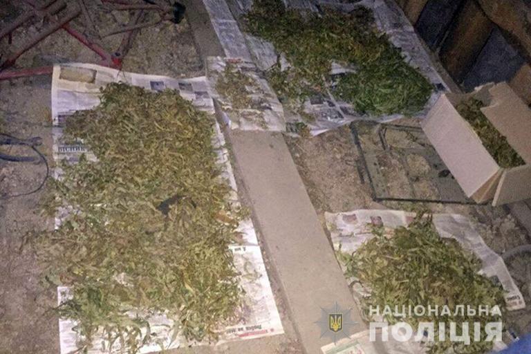 Прикарпатця взяли під варту за вирощування вдома наркотичних рослин.