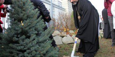 Глава УГКЦ закликає відмовитися від зрубаних живих ялинок на новорічні свята