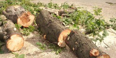Куди звертатися коломиянам, які хочуть зрізати дерево
