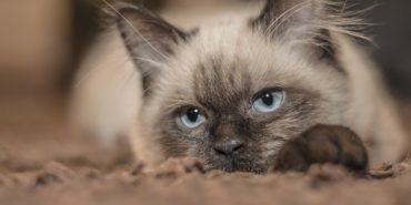 На Полтавщині суд засудив чоловіка до 6 років позбавлення волі за знущання над котом