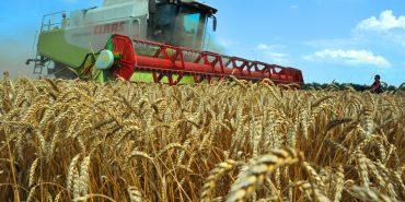 Прикарпаття лідирує у сільськогосподарській галузі. Інфографіка