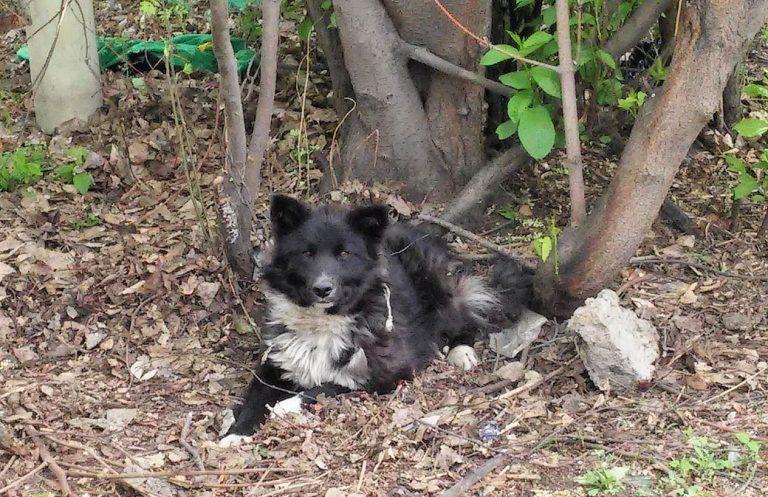 На Коломийщині невідомі познущалися над собакою: прив'язали дротом до дерева