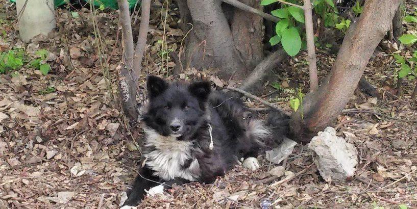 На Коломийщині невідомі познущалися над собакою: прив'язали дротом до дерева (фотофакт)