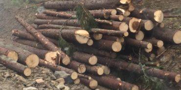 У Карпатському НПП продавали деревину за умисно заниженою ціною. Відкрито кримінальну справу