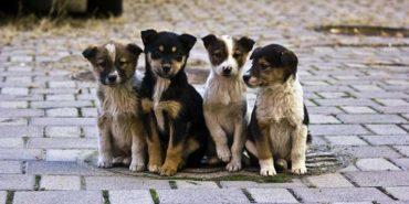 У 2018 році на Прикарпатті 970 безпритульних тварин знайшли домівки