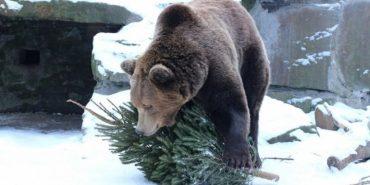 У Галицькому центрі реабілітації диких тварин рятують поранених звірів. ФОТО