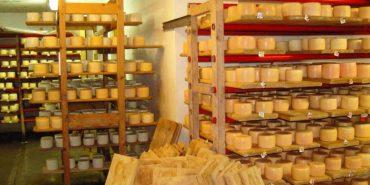 На Рогатинщині виготовляють сир з місцевого молока і випасають корів на пасовиську з електропастухом