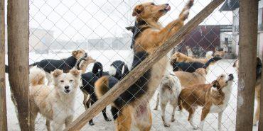 Як у Коломиї подолати проблему безпритульних тварин?