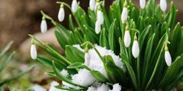Зима у столиці побила 139-річний рекорд температури повітря