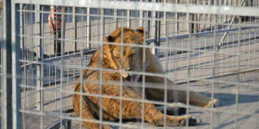 У Києві суд заборонив пересувні цирки з тваринами