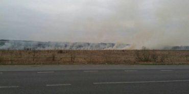 На Коломийщині знову спалюють суху траву і ніхто не несе за це відповідальності. ФОТОФАКТ