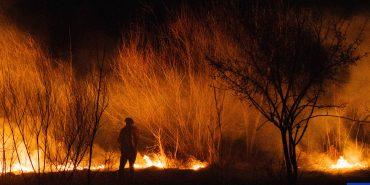 У Коломиї сталася масштабна пожежа сухотрав'я. ФОТО