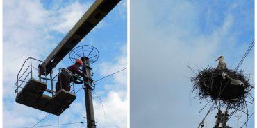Електрики Прикарпаття укріплюють безпечні гнізда для лелечих сімей. ФОТО