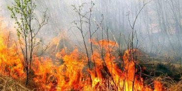Минулої доби на Франківщині гасили 50 пожеж сухої трави