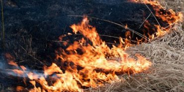 За минулу добу на Франківщині гасили понад півсотні пожеж сухої трави