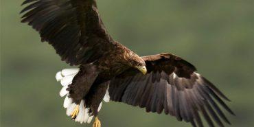 У Яремчі використовували червокнижних птахів, щоб люди могли зробити з ними фото