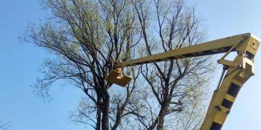 Коломийські комунальники зрізають аварійні дерева. ФОТОФАКТ
