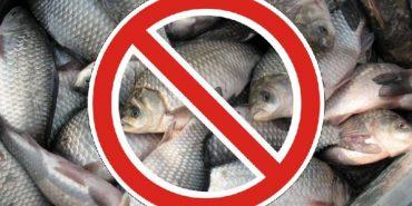 """Операція """"Нерест"""": на Коломийщині до 10 червня заборонено ловити рибу"""
